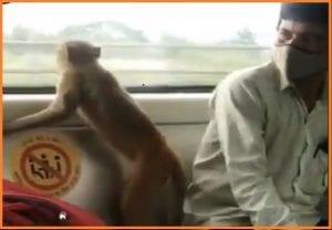 Delhi: दिल्ली मेट्रो में बंदर के सफर करने का वीडियो हुआ वायरल, यात्री के बगल बैठ शीशे से लिया बाहर का नजारा